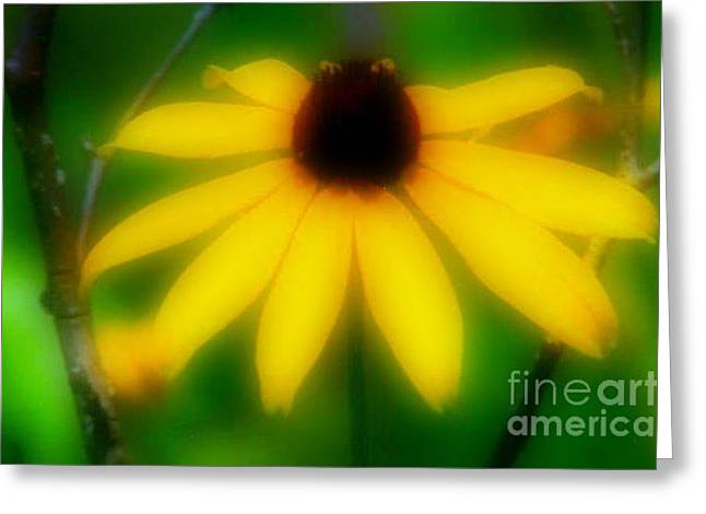 Yellow Flowers Stretched Prints Greeting Cards - Black Eye Susan Greeting Card by Michael Hoard