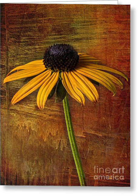 Nature Center Greeting Cards - Black Eyed Susan Greeting Card by Elena Nosyreva