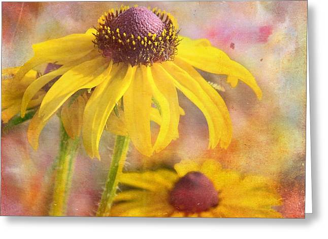 Black-eyed Susan Greeting Card by Melissa Bittinger