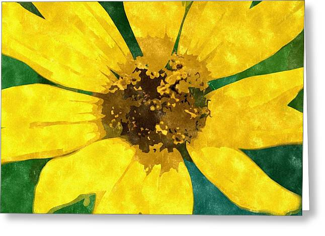Nature Center Drawings Greeting Cards - Black Eyed Susan Greeting Card by Rosemarie E Seppala