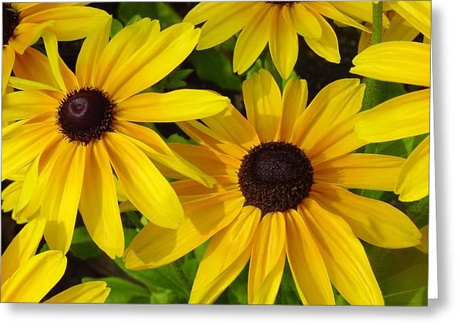 Eye Greeting Cards - Black Eyed Susans Greeting Card by Suzanne Gaff