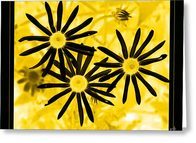 Brown Eyed Girl Greeting Cards - Floral - Black And Yellow Greeting Card by John Stephens