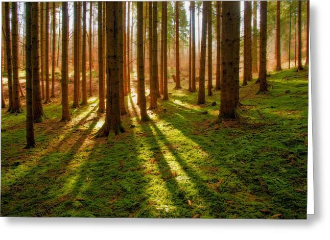 Deutschland Greeting Cards - Black Forest Greeting Card by Dustin  LeFevre
