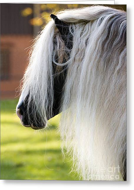 Coldblooded Greeting Cards - Black Forest Horse Greeting Card by Gabriele Boiselle