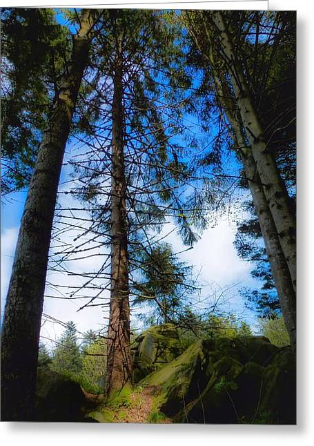 Storm Greeting Cards - Black Forest Greeting Card by Noze P