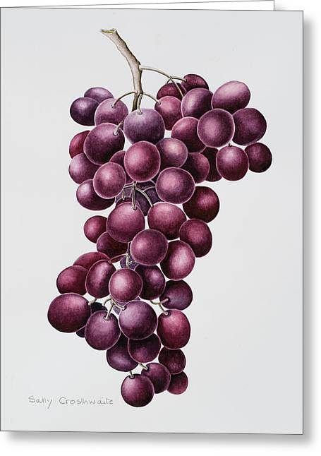 Grape Print Greeting Cards - Black Grapes Greeting Card by Sally Crosthwaite