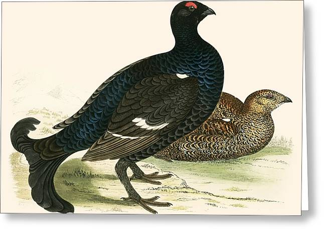 Hunting Bird Photographs Greeting Cards - Black Grouse Greeting Card by Beverley R. Morris