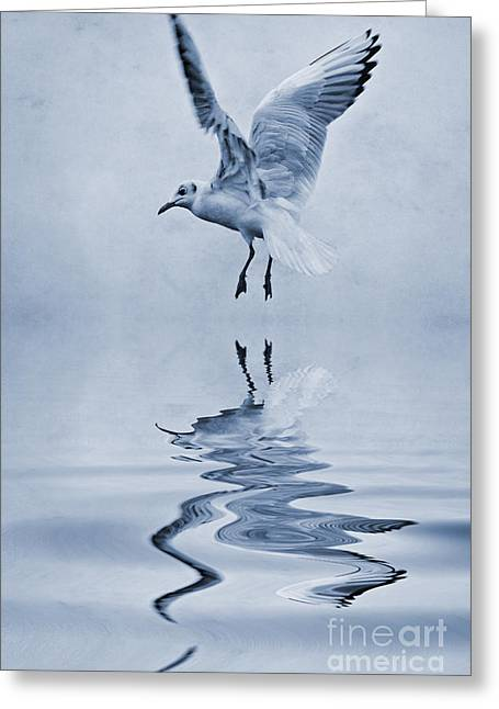 Gull Seagull Greeting Cards - Black headed gull cyanotype Greeting Card by John Edwards