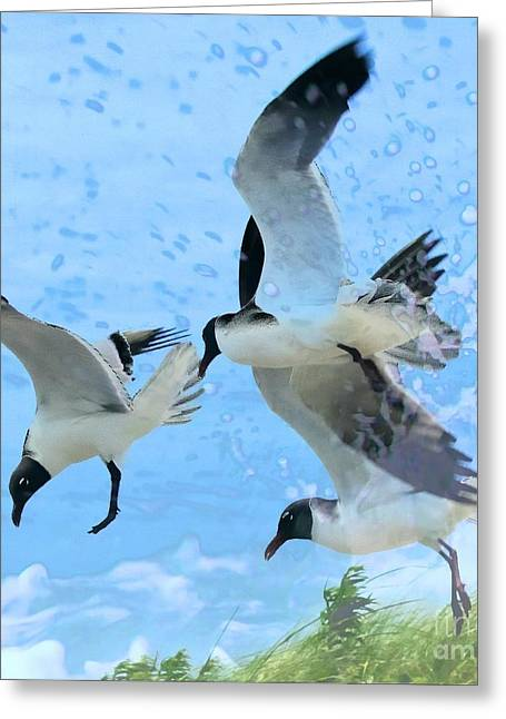 Scavenge Greeting Cards - Black-headed Gulls in Flight Greeting Card by Cathy Lindsey