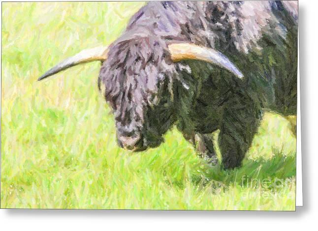 Black Highland Cattle Bull Greeting Card by Liz Leyden