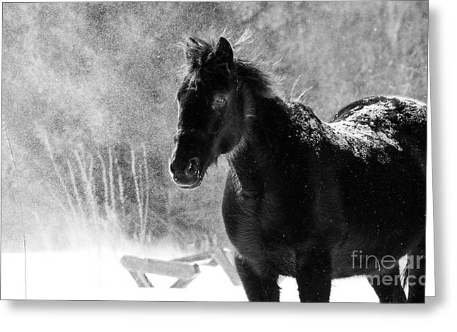 Wintry Greeting Cards - Black Horse Greeting Card by Cheryl Baxter