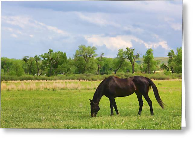 Brown Horse Photographs Greeting Cards - Black Horse in Montana Pasture Greeting Card by Jennie Marie Schell