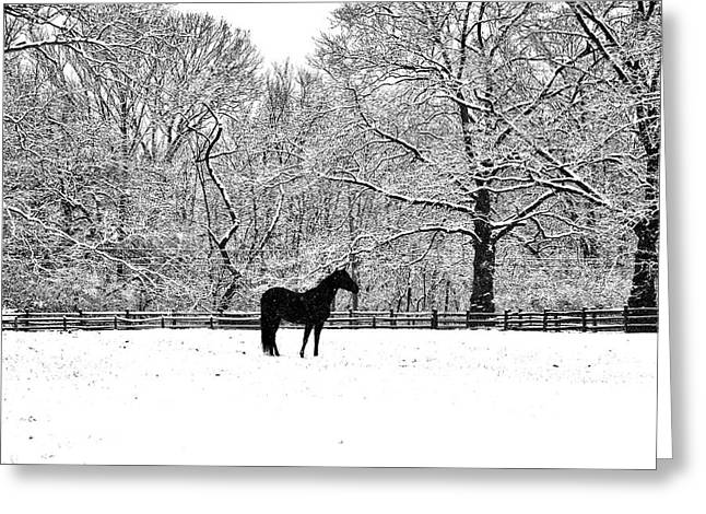 Erdenheim Farm Greeting Cards - Black Horse in the Snow Greeting Card by Bill Cannon