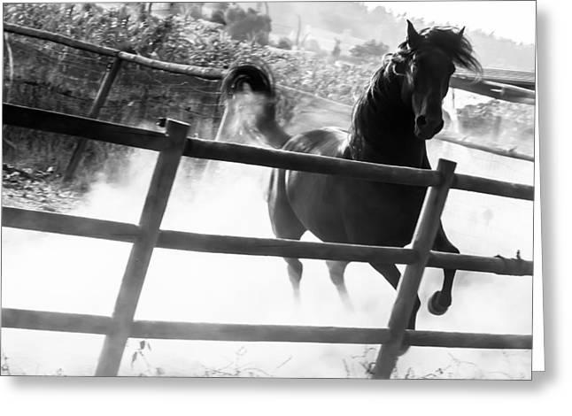 Horse Run Greeting Cards - Black horse looking at me Greeting Card by Filomena Francisco