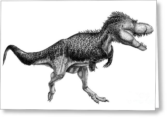 Pen And Ink Drawing Digital Art Greeting Cards - Black Ink Drawing Of Albertosaurus Greeting Card by Vladimir Nikolov