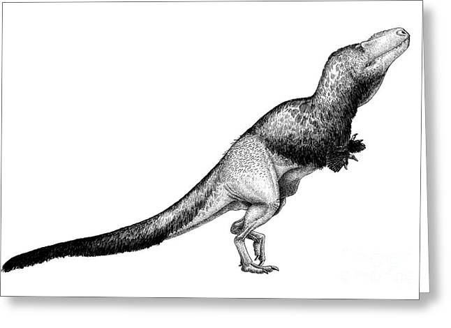 Pen And Ink Drawing Digital Art Greeting Cards - Black Ink Drawing Of Daspletosaurus Greeting Card by Vladimir Nikolov
