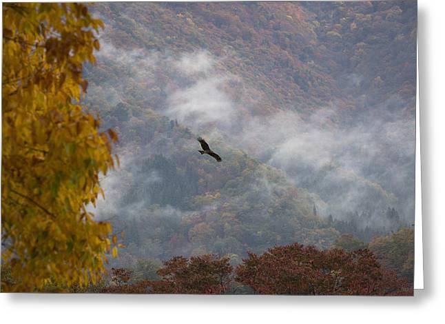 Black Kite Greeting Cards - Black Kite in flight Greeting Card by Ruben Vicente