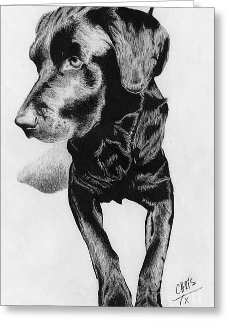 Quite Drawings Greeting Cards - Black Lab 1 Greeting Card by Chris Trudeau