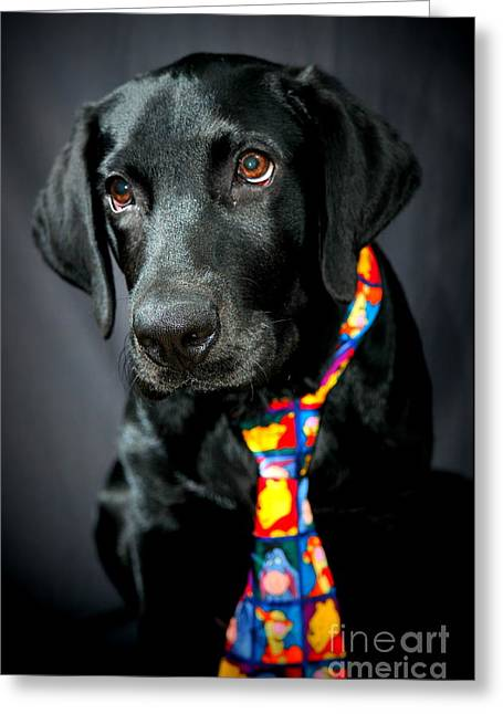 Black Tie Greeting Cards - Black Lab Portrait Greeting Card by Catherine Reusch  Daley