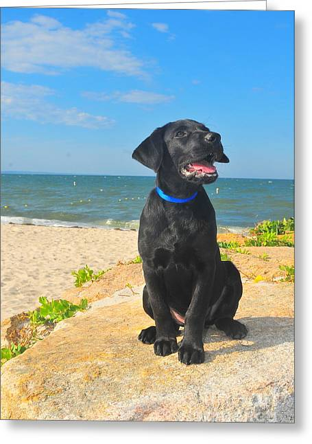 Black Lab Puppy Greeting Cards - Black Lab Puppy Greeting Card by Catherine Reusch  Daley