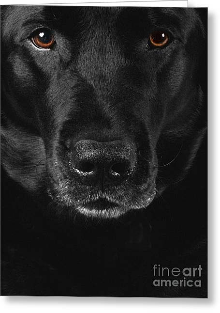 Beautiful Face Greeting Cards - Black Labrador Retriever Greeting Card by Diane Diederich