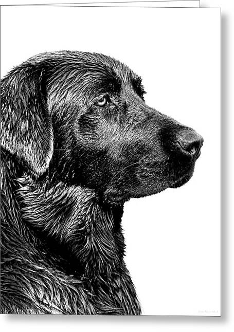 Labrador Retrievers Greeting Cards - Black Labrador Retriever Dog Monochrome Greeting Card by Jennie Marie Schell