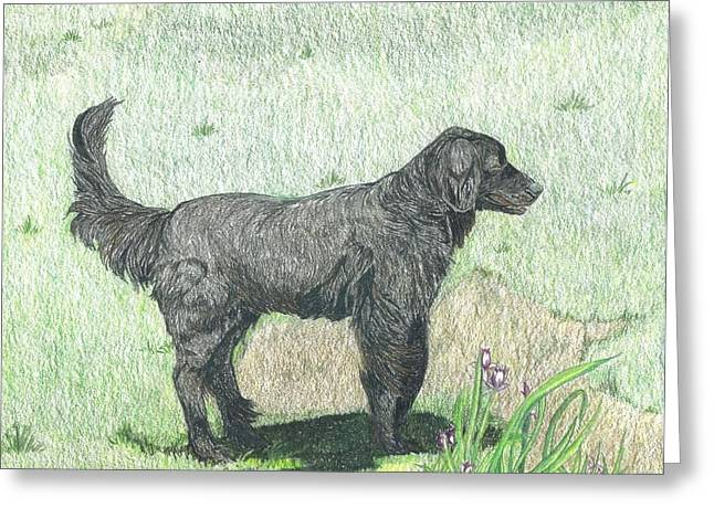 Retriever Prints Mixed Media Greeting Cards - Black Labrador Retriever Greeting Card by Maricay Smeenk