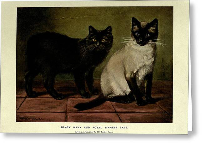 Persian Illustration Greeting Cards - Black Manx and Royal Siamese Cats Greeting Card by Philip Ralley