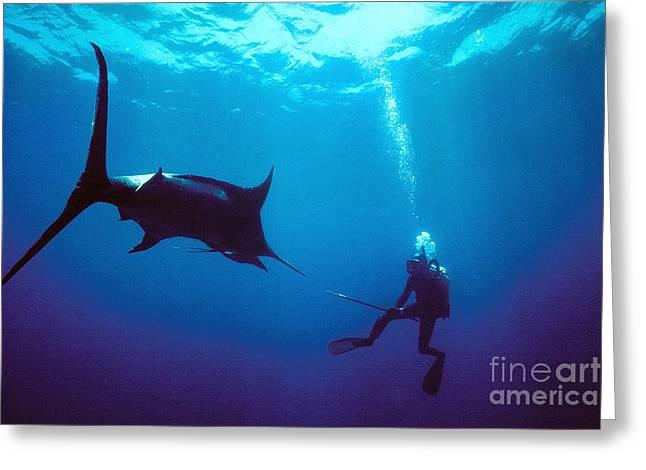Black Marlin Photographs Greeting Cards - Black Marlin attack Greeting Card by Derek Berwin