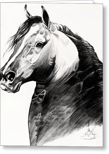 Horse Images Drawings Greeting Cards - Black Morgan Stallion Greeting Card by Cheryl Poland