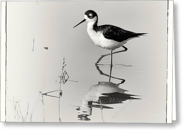 Black-necked Stilt at Carson Lake Wetlands Greeting Card by Priscilla Burgers
