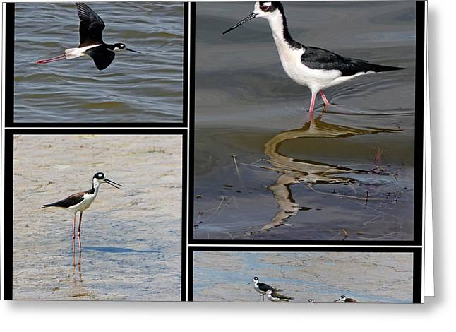 Reflection In Water Greeting Cards - Black necked Stilt Greeting Card by Dawn Currie