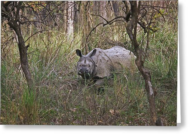 One Horned Rhino Greeting Cards - Black One Horned Rhino Greeting Card by Karma Ganzler