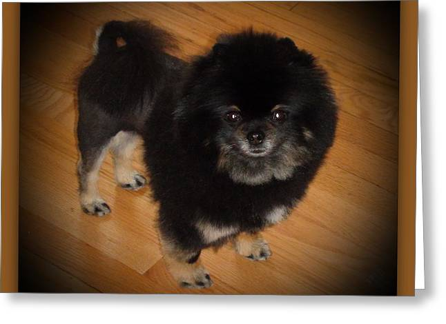 Sanford Greeting Cards - Black Pom with Lion Cut Greeting Card by Sanford