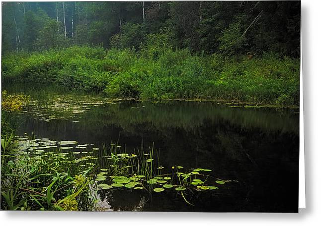 Russian Nature Greeting Cards - Black Pond Greeting Card by Jenny Rainbow