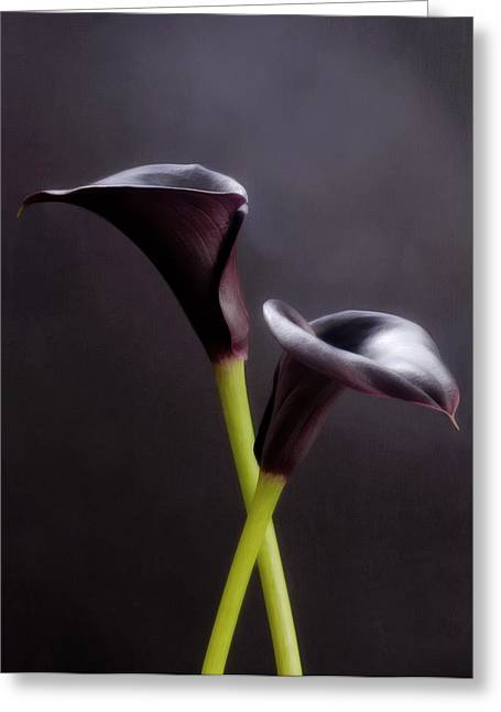 Calla Lily Greeting Cards - Black And White Purple Flowers Art Work Photography Greeting Card by Artecco Fine Art Photography