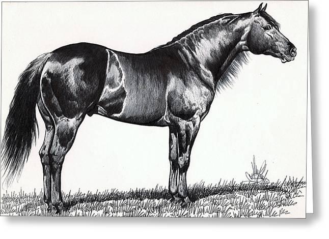 Quarter Horses Drawings Greeting Cards - Black Quarter Horse Greeting Card by Cheryl Poland