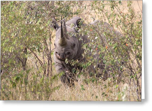 Black Rhino  Greeting Card by Chris Scroggins