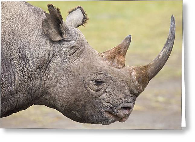 One Horned Rhino Greeting Cards - Black Rhino Great Rift Valley Kenya Greeting Card by Elliott Neep
