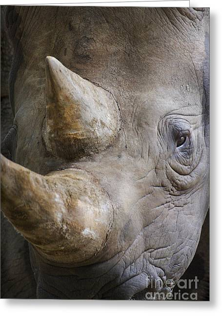 One Horned Rhino Greeting Cards - Black Rhinoceros Greeting Card by  Andrew Forsyth FLPA