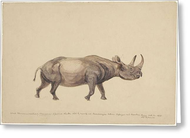 Eutheria Greeting Cards - Black rhinoceros, artwork Greeting Card by Science Photo Library