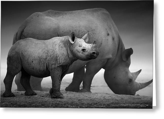 Stands Greeting Cards - Black Rhinoceros baby and cow Greeting Card by Johan Swanepoel