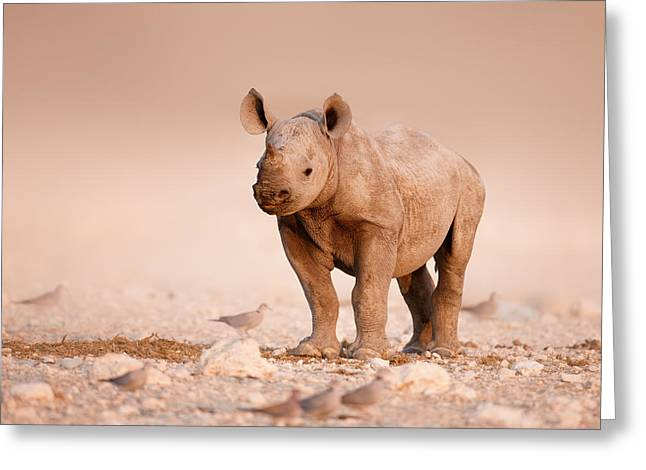 Reserve Greeting Cards - Black Rhinoceros baby Greeting Card by Johan Swanepoel