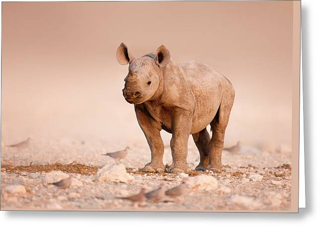Stands Greeting Cards - Black Rhinoceros baby Greeting Card by Johan Swanepoel