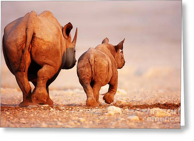 Rhinos Greeting Cards - Black Rhinoceros calf and coway Greeting Card by Johan Swanepoel