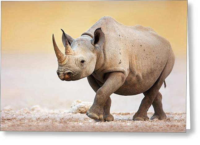 One Horned Rhino Greeting Cards - Black Rhinoceros Greeting Card by Johan Swanepoel