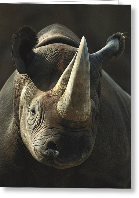 Critically Endangered Animal Greeting Cards - Black Rhinoceros Portrait Greeting Card by San Diego Zoo