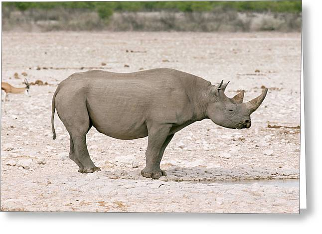 Black Rhinoceros Greeting Card by Simon Booth
