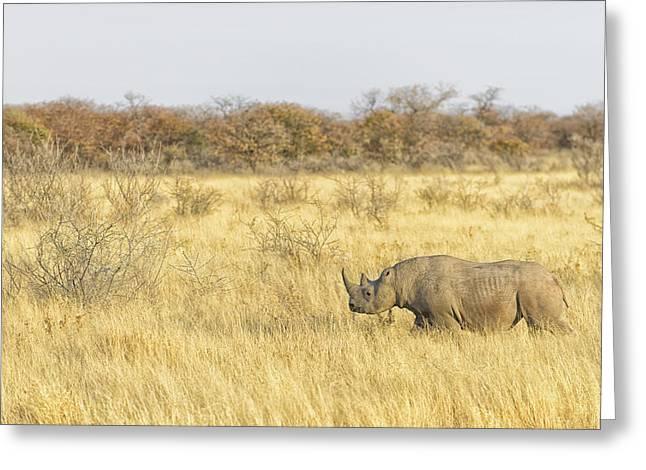Bush Wildlife Greeting Cards - Black Rhinoceros Walking the Dry Plains Greeting Card by Paul W Sharpe Aka Wizard of Wonders