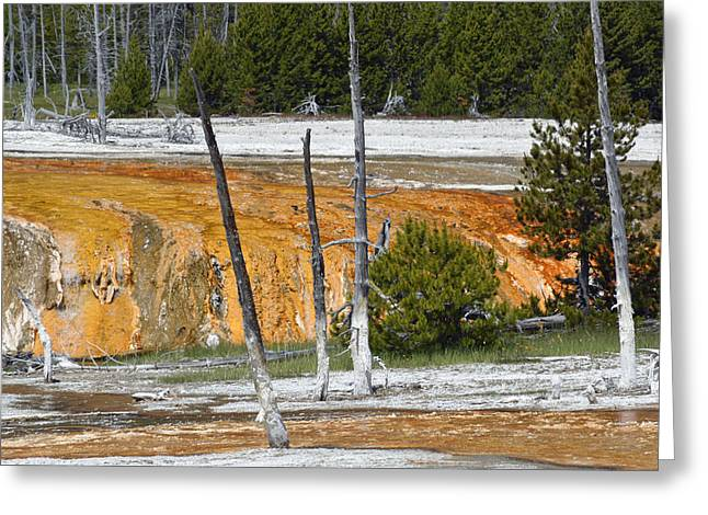 Black Sand Basin Therma Runoff Yellowstone Greeting Card by Bruce Gourley